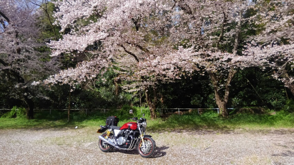 桜の木の下ショット