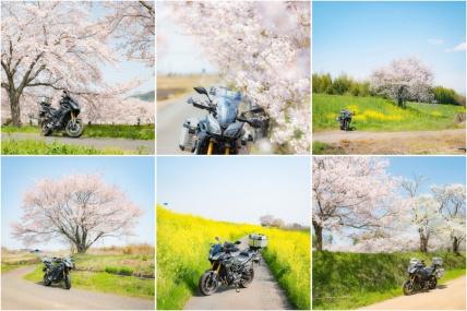 茨城の春爛漫