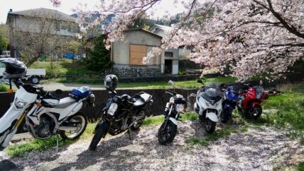 桜の下で大型も中型も仲よく♪