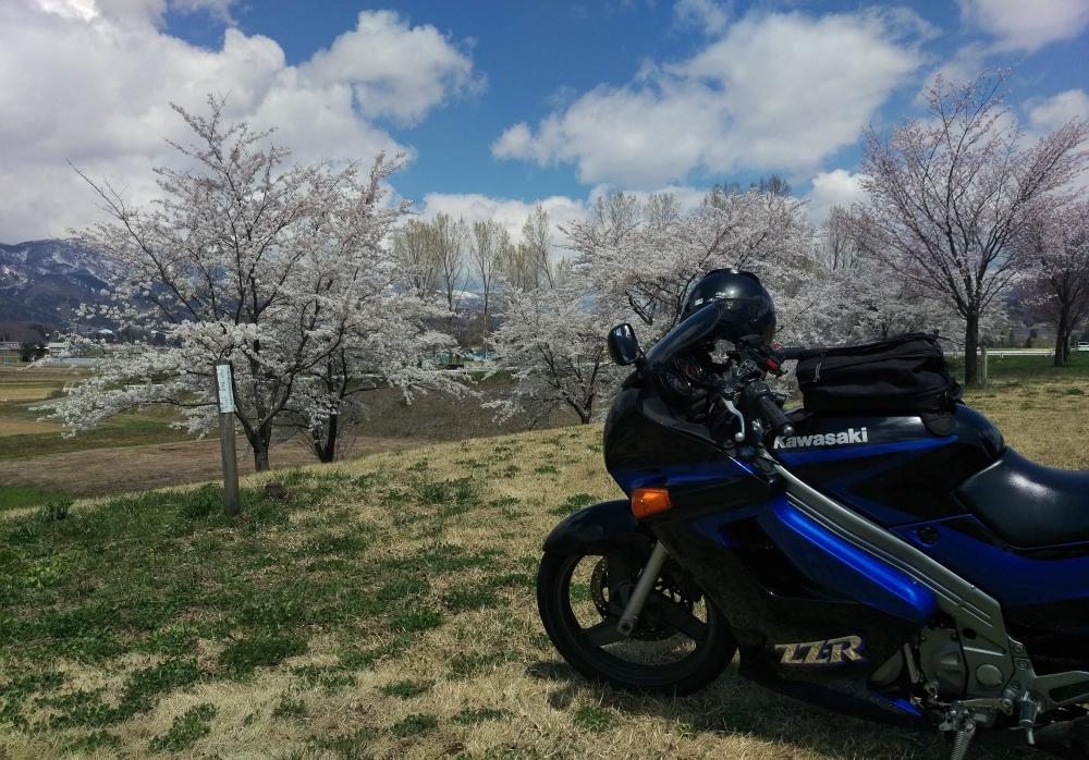 桜を追いかけて
