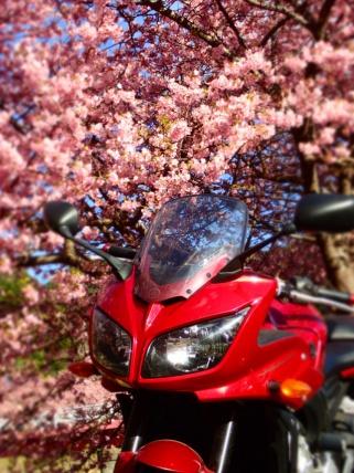 一足早く桜の地へ