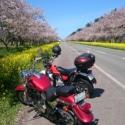 早く春になーれ