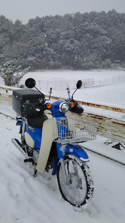 雪の日のカブ