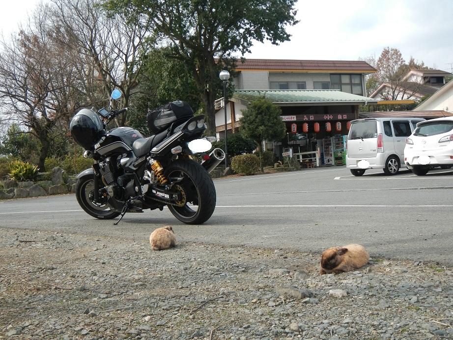ウサギとカメ?
