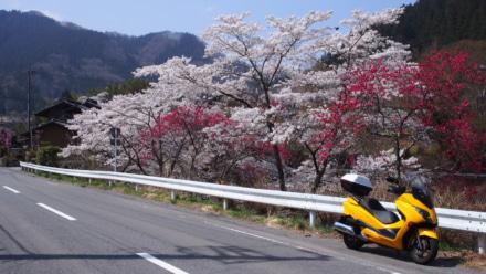 山にも春が来た!