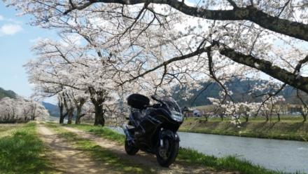 飛騨高山の春