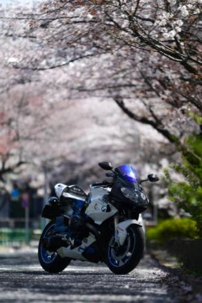 花よりバイクだったのが、、、