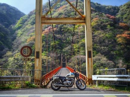 吊橋と山桜
