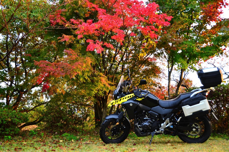 秋雨と紅葉と