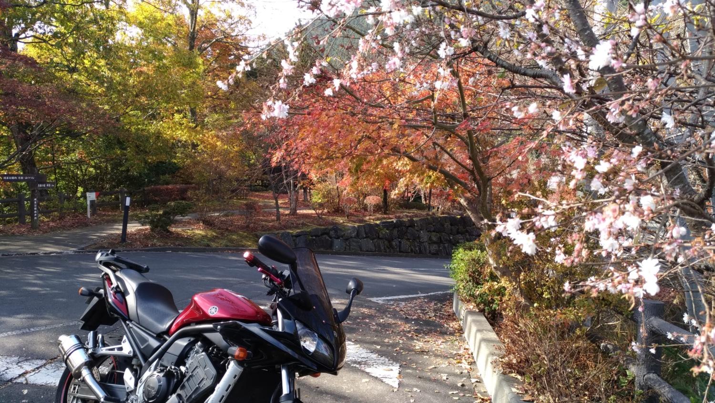 冬桜と紅葉とバイク