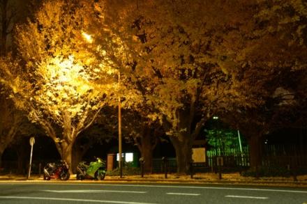 ライトアップされた木が好き。