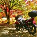 金色に輝く紅葉