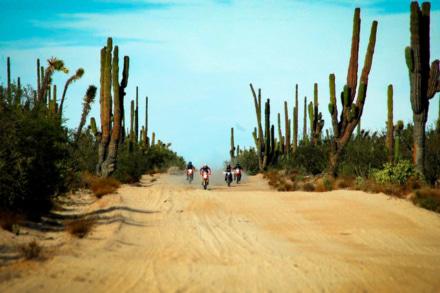 風魔プラス1が、メキシコ バハ・カリフォルニア半島オフロードツアー2019の参加者を募集中!