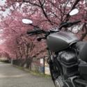 河津桜まつり2019