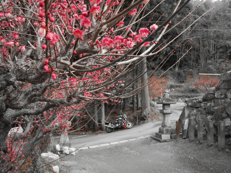 春の訪れを待ちきれず・・・