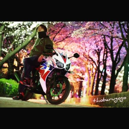 桜のトンネルくぐって