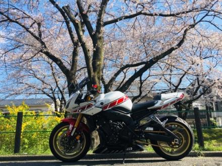 青春を桜花