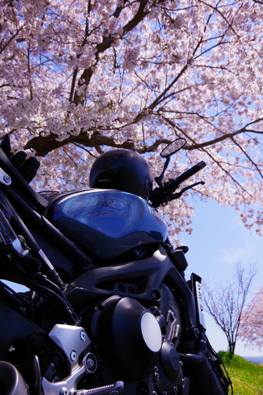 桜の下でバイクと花見