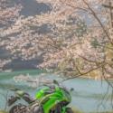 緑と桜と湖と