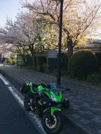 高速道路の桜