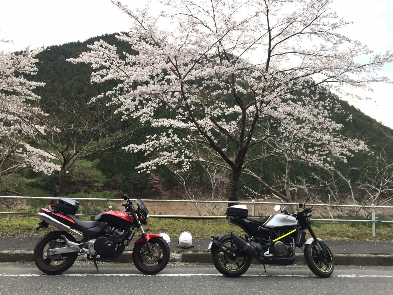 幸せの紅白バイクと舞い踊る桜