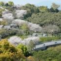 金峰オレンジロード「げんやま展望公園」の春