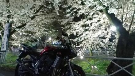 夜桜とFAZER
