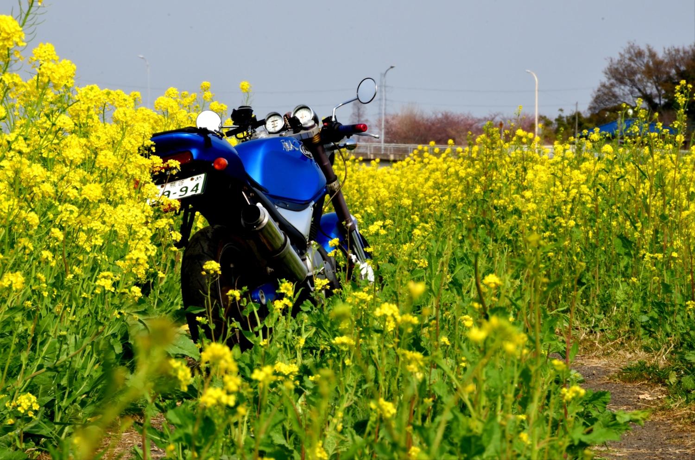 幸せの黄色い道
