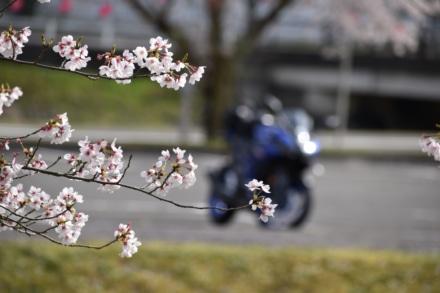 心もタイヤも桜色