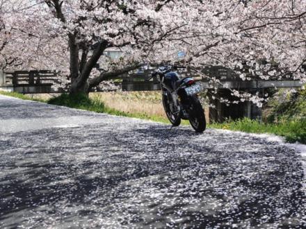桜とSRX-6