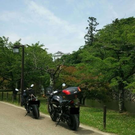 木々の間から彦根城