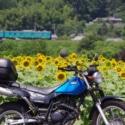 電車とひまわりとマイバイク(^.^)