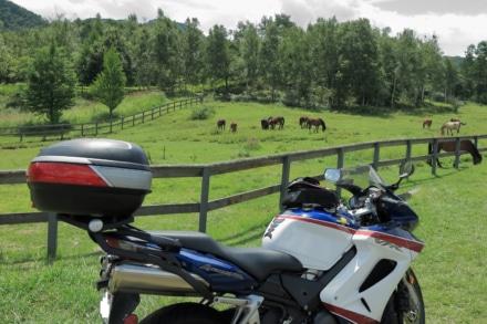 愛馬と木曽馬